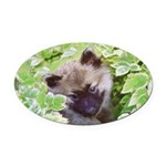 Keeshond Puppy Oval Car Magnet