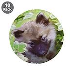 Keeshond Puppy 3.5