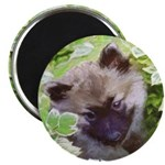 Keeshond Puppy Magnet