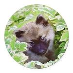 Keeshond Puppy Round Car Magnet