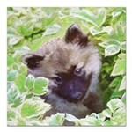 Keeshond Puppy Square Car Magnet 3