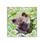 Keeshond Puppy Square Sticker 3