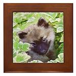 Keeshond Puppy Framed Tile