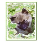 Keeshond Puppy Small Poster