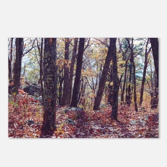 Skyline Drive Woods Postcards (Package of 8)