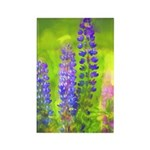 Lupines Rectangle Magnet