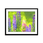 Lupines Framed Panel Print