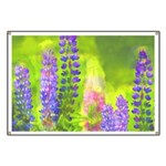 Lupines Banner