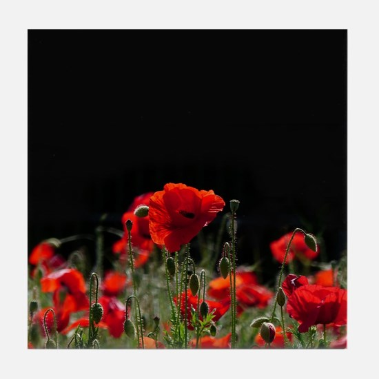 Red Poppies in bright sunlight Tile Coaster