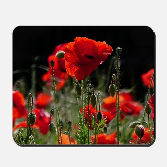 Red Poppies in bright sunlight Mousepad