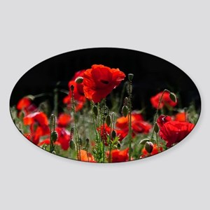 Red Poppies in bright sunlight Sticker