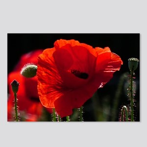 Red Poppies in bright sun Postcards (Package of 8)