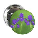 Purple Iris 2.25