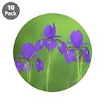 Purple Iris 3.5