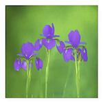 Purple Iris Square Car Magnet 3