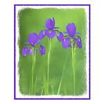 Purple Iris Small Poster