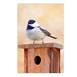 Chickadee on Birdhouse Postcards (Package of 8)