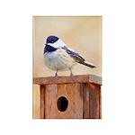 Chickadee on Birdhouse Rectangle Magnet (10 pack)
