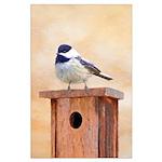Chickadee on Birdhouse Large Poster