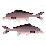 Nile Elephant-snout fish Posters