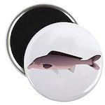 Nile Elephant-snout fish Magnets
