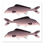 Nile Elephant-snout fish Square Car Magnet 3
