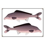 Nile Elephant-snout fish Banner