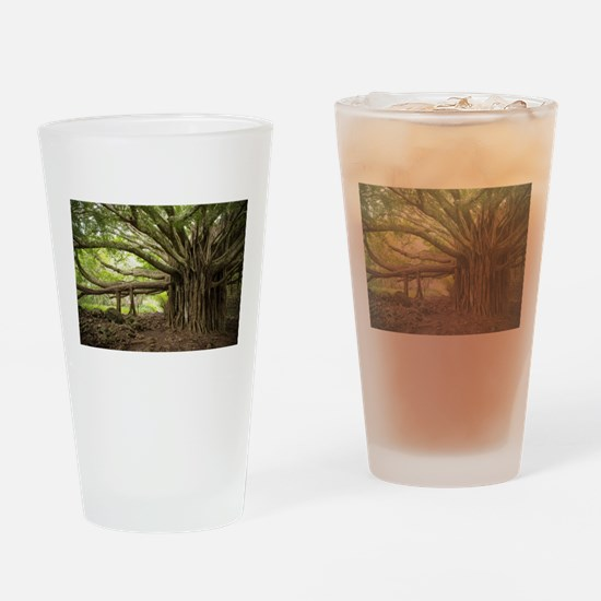 Massive Banyan Tree in Maui Drinking Glass