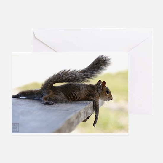 Funny Squirrel Photocard Greeting Cards