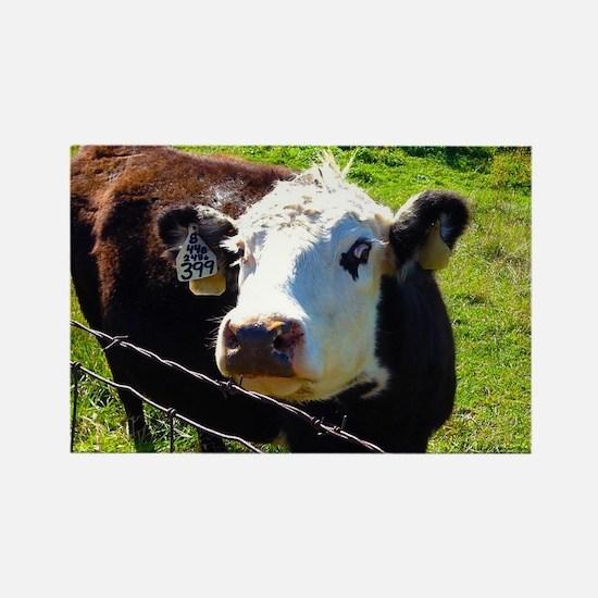 Cute Cow photos Rectangle Magnet