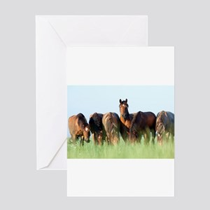 Beautiful horse stallion horses sun Greeting Cards