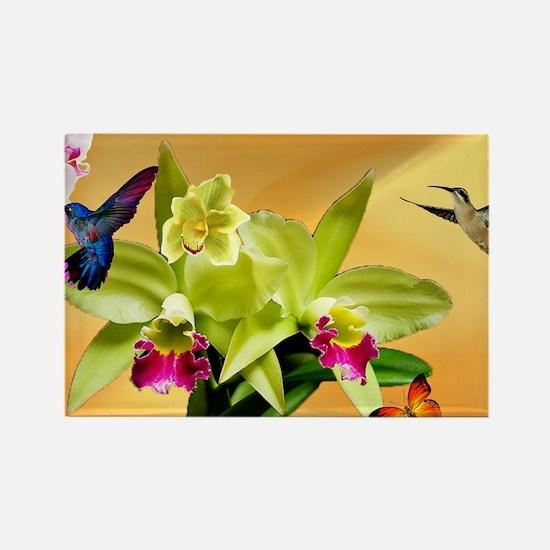 Cute Hummingbird Rectangle Magnet