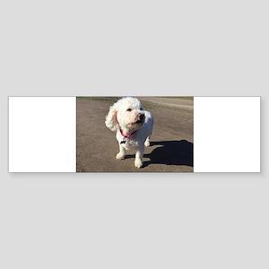 Breeze in Your Fur Bumper Sticker