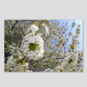 White Cherry Blossoms 02, Postcards (Package of 8)