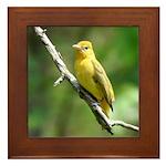 Lady Goldfinch Framed Tile
