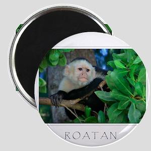 ROATAN Monkey Magnets