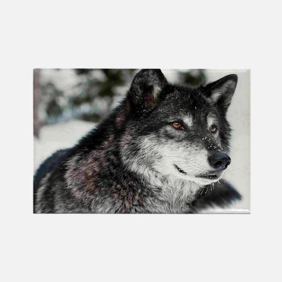 Black Wolf Magnets