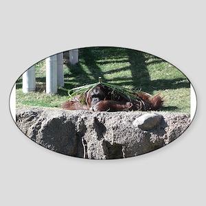 Orangutan lying down Sticker