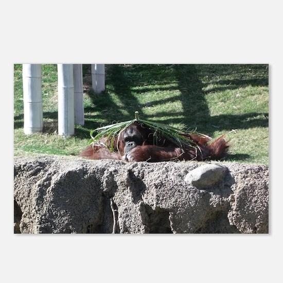Orangutan lying down Postcards (Package of 8)