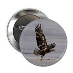 "Hawk 2.25"" Button"