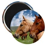 2 Horses 2.25