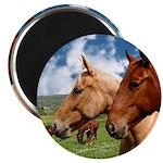 2 Horses Magnet