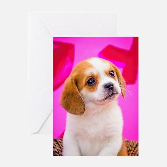 Beagle valentine Greeting Card