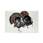 Wild Turkey Pair Rectangle Magnet (10 pack)