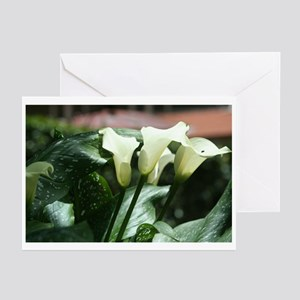 Calla Lilies Greeting Cards (Pk of 20)
