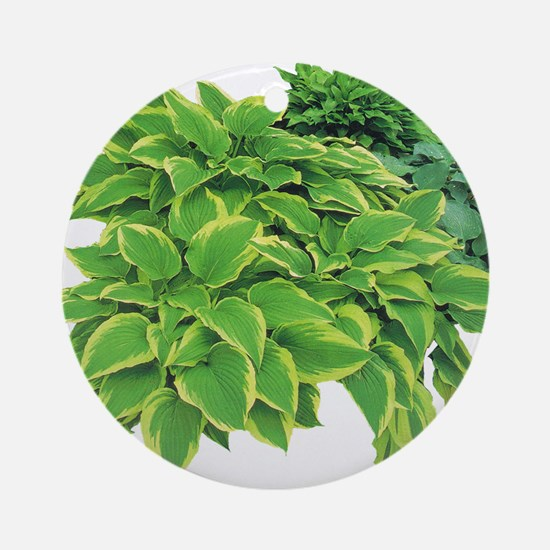 Hostas Ornament (Round)