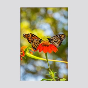Monarch Butterflies On Mini Poster Print