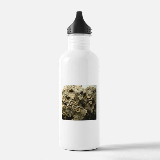 cluster of fossil shel Water Bottle