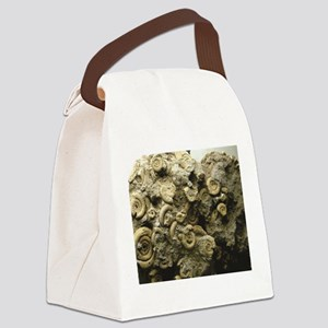 cluster of fossil shells Canvas Lunch Bag