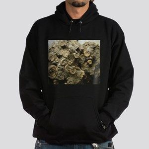 cluster of fossil shells Sweatshirt